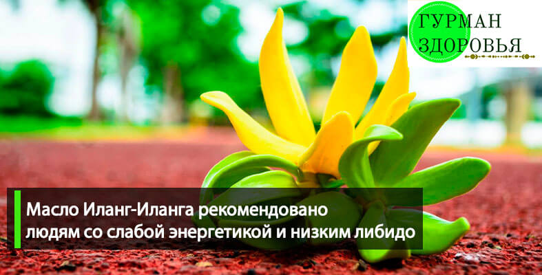 Иланг иланг эфирное масло купить в Украине