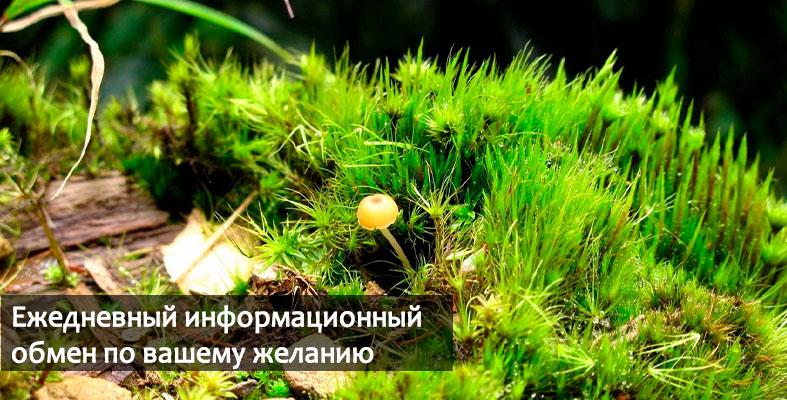 Фитосбор индивидуальный заказать Украина