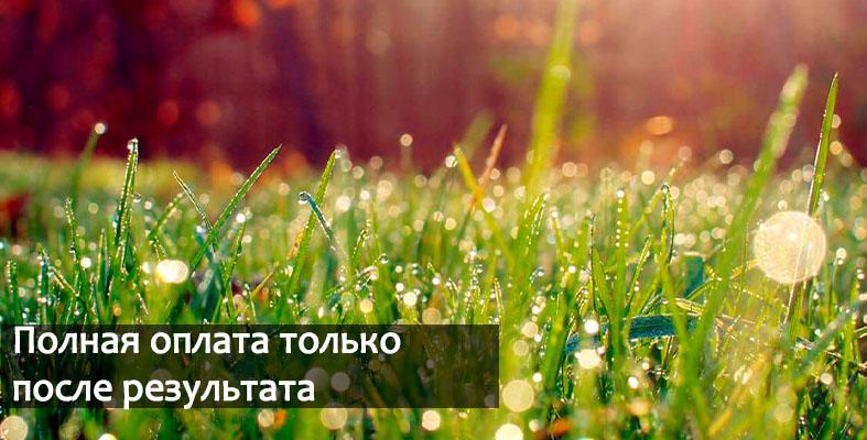 Фитосбор индивидуальный лекарственные травы
