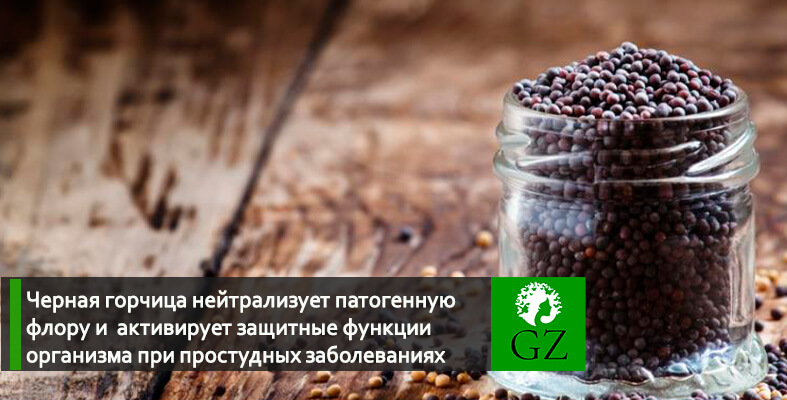 Черная горчица купить в Украине