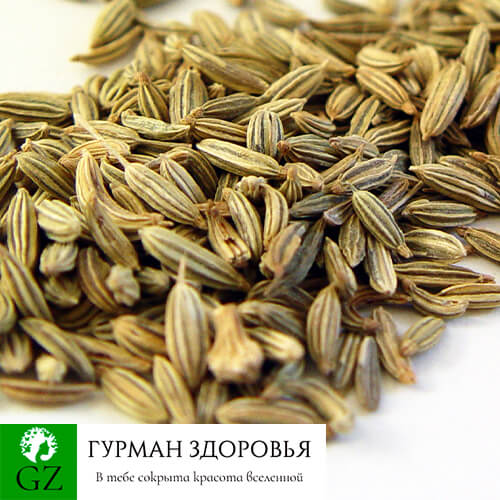 Семена фенхеля противопоказания
