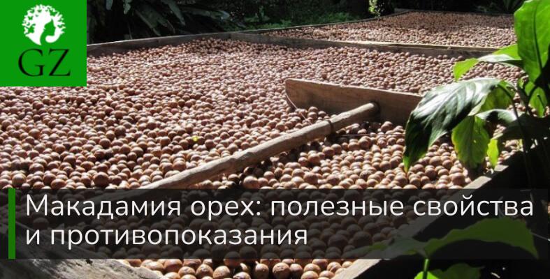 Макадамия орех полезные свойства и противопоказания