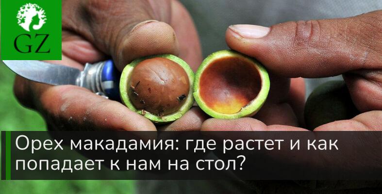 Орех макадамия где растет